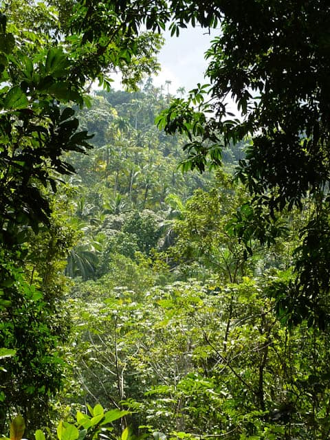 Große Pflanzenvielfalt