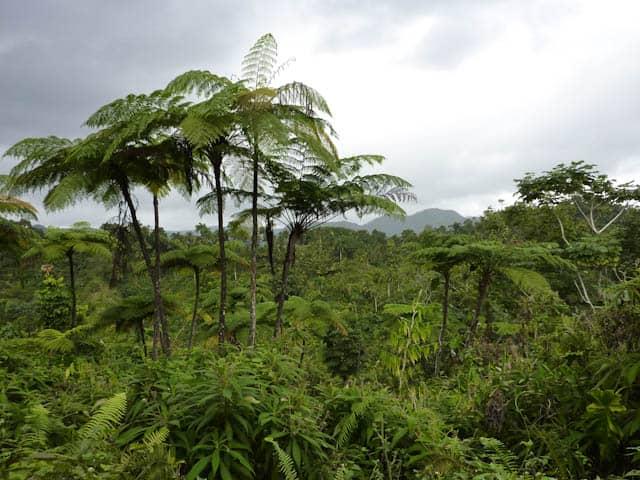 Reichhaltige Pflanzenwelt