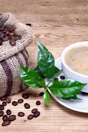 Kaffeeanbau in Kuba
